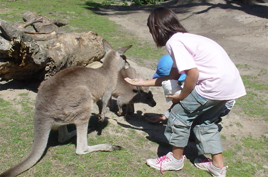 ARET high school and university australian recreation and educational tours wollongong kangaroo feeding